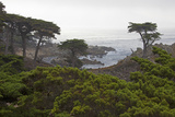USA, California, Monterey. Monterey Cypress Trees Along 17-Mile Drive Photo by Kymri Wilt