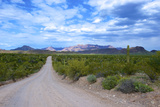 Organ Pipe Cactus National Monument, Ajo Mountain Drive in the Desert Photo by Richard Wright