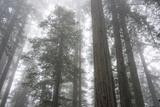 Lady Bird Johnson Grove, Prairie Creek Redwoods SP, California Photo by Rob Sheppard