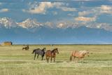 Heard of Horses in Hayfield, San Luis Valley Photo by Howie Garber