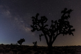 Joshua Trees Silhouetted by Starry Skies in Joshua Tree NP, California Photo by Chuck Haney
