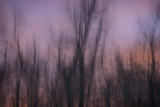 Abstract of Trees at Sunset , Upper Mississippi, Le Claire Iowa Photo by Rona Schwarz