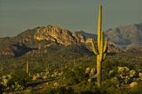 Sunset, Superstition Mts, Lost Dutchman SP, Apache Junction, Arizona Photo by Michel Hersen
