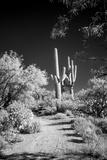 USA, Arizona, Tucson, Saguaro National Park Foto von Peter Hawkins