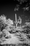 USA, Arizona, Tucson, Saguaro National Park Fotografia por Peter Hawkins