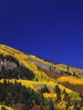 Hillside of Aspen Trees and Evergreen Trees, La Plata County, Colorado Photo by Greg Probst