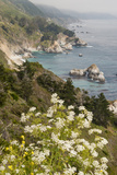 California, Big Sur, View of Pacific Ocean Coastline with Cow Parsley Photo by Alison Jones
