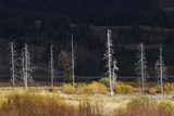 Dead Trees, Lamar Valley Photo by Ken Archer