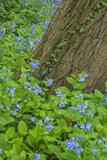 USA, Pennsylvania, Wayne, Chanticleer Garden. Spring Scenic Photo by Jay O'brien