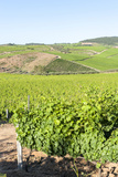 Europe, Portugal, Favaios, Vineyards Photo by Lisa S. Engelbrecht