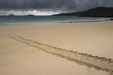 Galapagos Green Sea Turtle Tracks. Floreana Island, Galapagos, Ecuador Photo by Pete Oxford