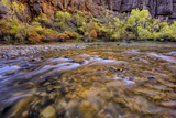 USA, Utah, Zion National Park. Stream in Autumn Scenic Photo by Jay O'brien