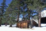 USA, California, House and Trees at Sierra Nevada Mountains Photo by Zandria Muench Beraldo