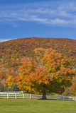 A Maple Tree in Fall at Castle in the Clouds, New Hampshire Photo by Jerry & Marcy Monkman