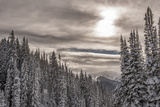 Snow in Evergreens from Beartrap Canyon, Wasatch Mountains, Utah Photo by Howie Garber