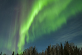 USA, Alaska. Aurora Borealis over Forest Photo by Cathy & Gordon Illg