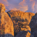 New Mexico, City of Rocks State Park. Sunset on Boulders and Tree Photo by Don Paulson