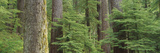 Hemlock and Douglas Fir in the Sol Duc Area of Olympic NP, Washington Photo by Greg Probst