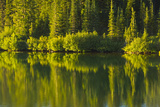 Close Up, Reflection, Reflection Lake, Mount Rainier NP, Washington Photo by Michel Hersen
