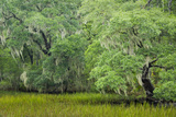 South Carolina, Charleston, Edisto Beach SP. Oak Trees Next to Swamp Photo autor Don Paulson