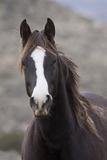 Wild Horse, Steens Mountains Photo by Ken Archer