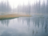 Lodge Pole Pines Along Fire Hole Lake, Yellowstone NP, Wyoming Photo by Greg Probst