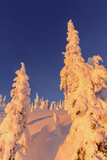 Snowghosts Catch the Sunset at Whitefish Mountain Resort, Montana Photo by Chuck Haney