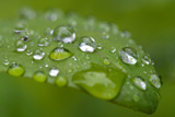 Close-up of Rain Droplets on Leaf Photo by Matt Freedman