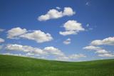 USA, Washington State, Palouse. Green Wheat Field Landscape Photo by Dennis Flaherty