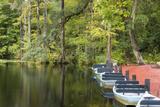 USA, South Carolina, Cypress Gardens. Boat Rental Dock in Swamp Photo by Don Paulson