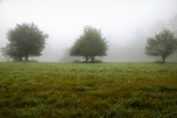 Usa, New England New Hampshire Trees in Fog Photo by John Ford