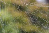 USA, WA. Raindrops Decorate Spider Web. Fall Color Backdrop Photo by Trish Drury