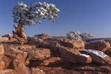 USA, Utah, Dead Horse Point, Canyonlands National Park, Lone Pine Photo by John Ford