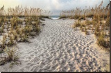 Path to the Beach Stretched Canvas Print by Michael Cahill