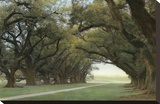 Alley of the Oaks Stretched Canvas Print by William Guion