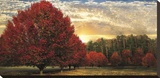 Crimson Trees Stretched Canvas Print by  Celebrate Life Gallery