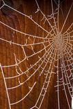USA, Oregon, Keizer. Hoarfrost on Orb Spider Web Photographic Print by Rick A. Brown