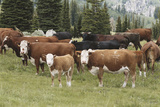 Cattle Standing on Landscape Photographic Print by David R. Frazier
