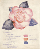 Botanical Study I Poster by Belle Poesia