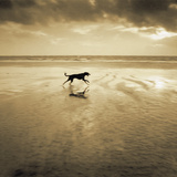 Dog on the Beach, West Wittering Giclee Print by Jo Crowther
