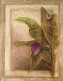 Plantano En Flor II Julisteet tekijänä Patricia Pinto