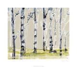 Parchment Birchline I Limited Edition by Jennifer Goldberger