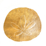 Gold Sand Dollar II (gold foil) Posters by Jairo Rodriguez