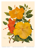 Hawaiian Hibiscus - Honolulu, Hawaii USA Posters by Dorothy Falcon Platt