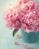 Peony Flowers in a Vase Photo by  egal