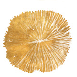 Gold Sand Dollar I (gold foil) Prints by Jairo Rodriguez