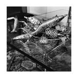 A Silver Sculpture of Fish Regular Photographic Print