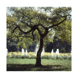 Outtake: Tree in the Jacqueline Kennedy Garden Regular Photographic Print