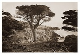 Cypress Point, Monterey, California, about 1880s Prints by Carleton Watkins