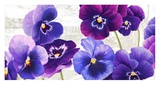 Dance of Pansies Prints by Jenny Thomlinson